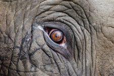 elefant-sm